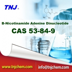 beta-Nicotinamide Adenine Dinucleotide CAS 53-84-9 suppliers